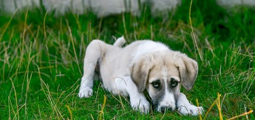 un chien qui a le cancer