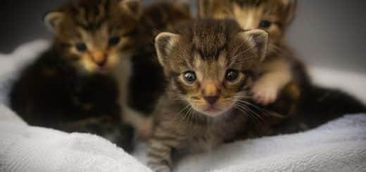 des petits chatons sur une serviette