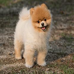 un chien en bonne sante