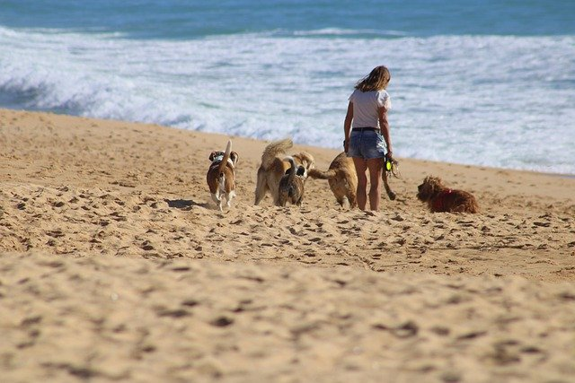groupe de chiens sur la plage